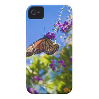Monarch Butterfly iPhone 4 Case