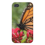 Monarch Butterfly Iphone Case iPhone 4 Covers