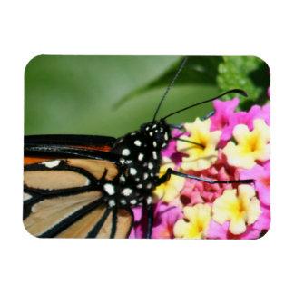 Monarch Butterfly, Lantana Flowers.Magnet