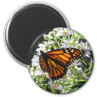 Monarch Butterfly Magnet