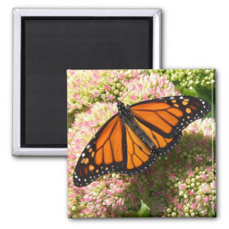 Monarch Butterfly - Magnet