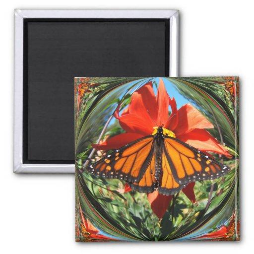 Monarch butterfly ~ magnet