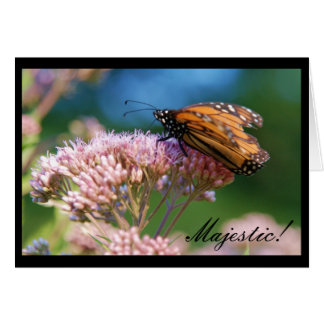 Monarch Butterfly, Majestic! Card