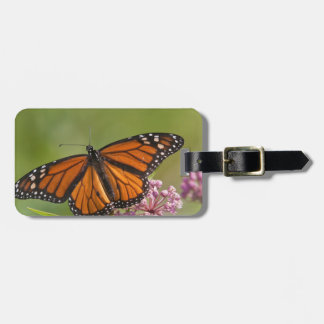 Monarch Butterfly male on Swamp Milkweed Bag Tag
