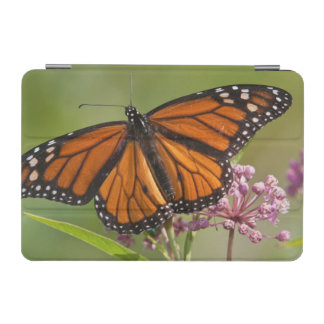 Monarch Butterfly male on Swamp Milkweed iPad Mini Cover
