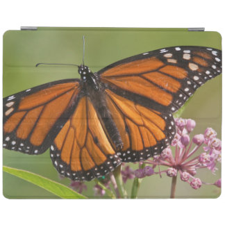Monarch Butterfly male on Swamp Milkweed iPad Smart Cover