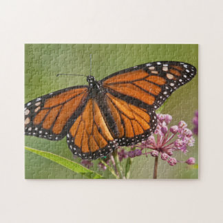 Monarch Butterfly male on Swamp Milkweed Jigsaw Puzzle