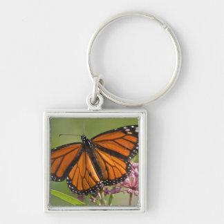 Monarch Butterfly male on Swamp Milkweed Keychain