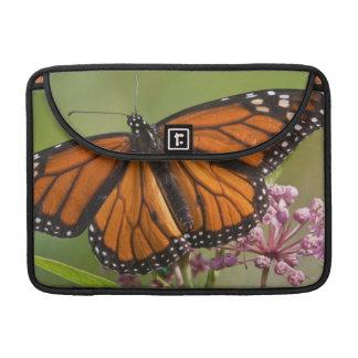 Monarch Butterfly male on Swamp Milkweed MacBook Pro Sleeve