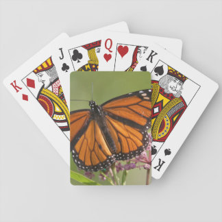 Monarch Butterfly male on Swamp Milkweed Playing Cards