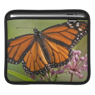 Monarch Butterfly male on Swamp Milkweed Sleeve For iPads
