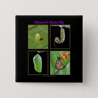 Monarch Butterfly Metamorphosis Button