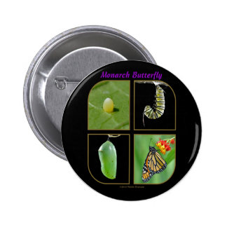 Monarch Butterfly Metamorphosis Button - Round