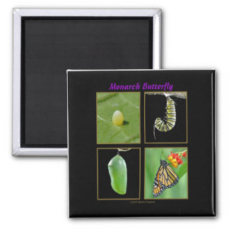 Monarch Butterfly Metamorphosis Magnet