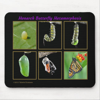 Monarch Butterfly Metamorphosis Mousepad
