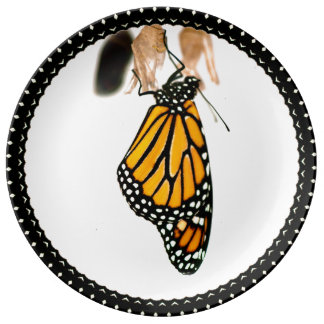 Monarch Butterfly Newborn with Cocoon - Photograph Plate