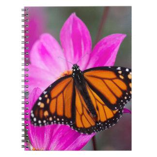 Monarch Butterfly Notebook 2