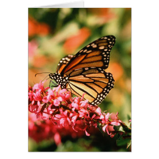 Monarch Butterfly notecards Card