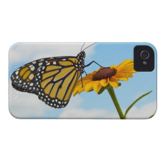 Monarch Butterfly on a Black Eyed Susan Case-Mate iPhone 4 Case
