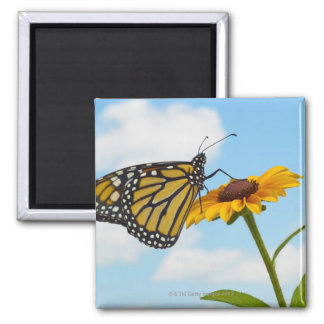 Monarch Butterfly on a Black Eyed Susan Magnet