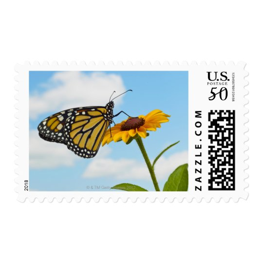 Monarch Butterfly on a Black Eyed Susan Postage