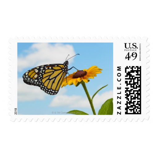 Monarch Butterfly on a Black Eyed Susan Postage Stamps