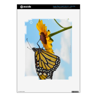 Monarch Butterfly on a Black Eyed Susan iPad 3 Skin