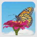 Monarch Butterfly on a Flower Square Sticker