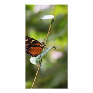 Monarch Butterfly On a Twig Custom Photo Card