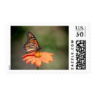 Monarch Butterfly on an orange flower Postage