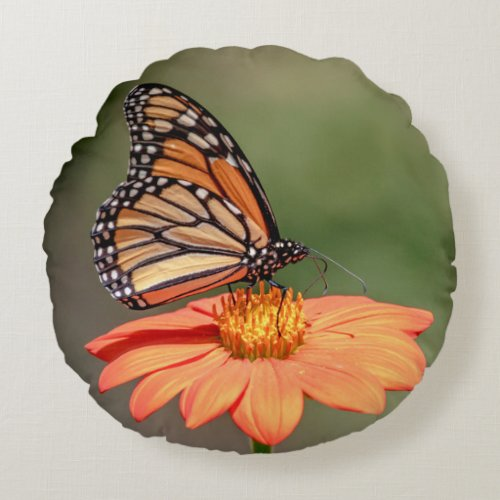 Monarch Butterfly on an orange flower Round Pillow