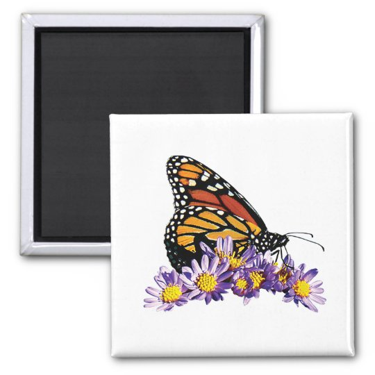 Monarch Butterfly on Aster Magnet
