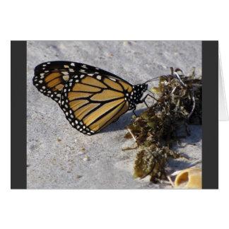 Monarch Butterfly on Beach Seaweed Card
