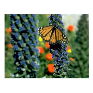 Monarch Butterfly on Blue Flowers Post Cards