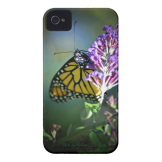 Monarch butterfly on butterfly bush Case-Mate iPhone 4 cases
