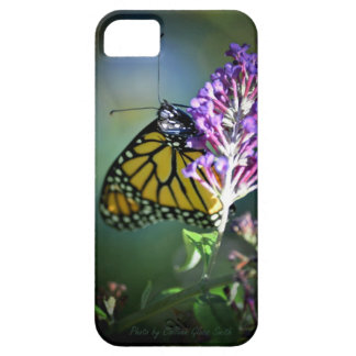 Monarch butterfly on butterfly bush iPhone 5 cases