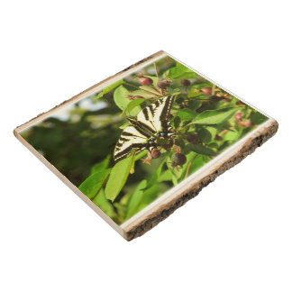 Monarch Butterfly on Crab Apple Tree Wood Panel
