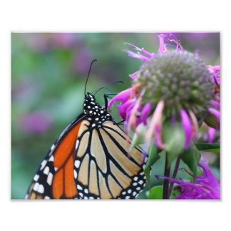 Monarch Butterfly On Flower 10x8 Nature Photo