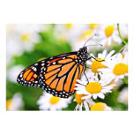 Monarch butterfly on flower custom announcements