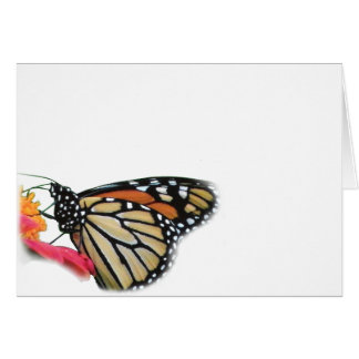 Monarch Butterfly on Flower Picture Blank Card
