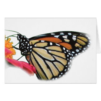 Monarch Butterfly on Flower Picture Card