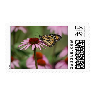 Monarch Butterfly on Flower Postage
