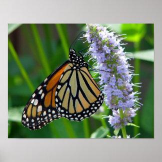 Monarch Butterfly on flower Print