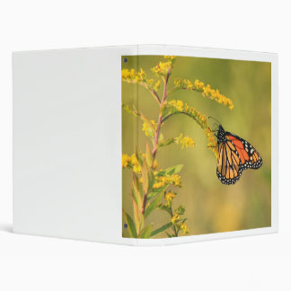Monarch Butterfly on Goldenrod Binder
