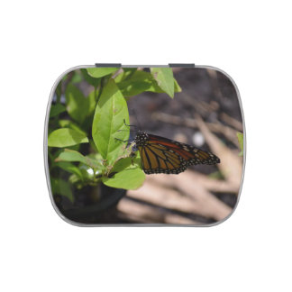 monarch butterfly on green leaf plant candy tin
