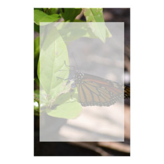 monarch butterfly on green leaf plant stationery