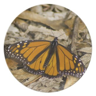 Monarch Butterfly on Ground Party Plate