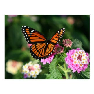 Monarch Butterfly on Lantana Flower Postcard