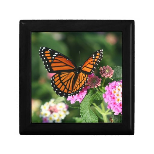 Monarch Butterfly on Lantana Flowers.Gift Box