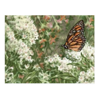 Monarch Butterfly on Milkweed Flowers Painting Postcard